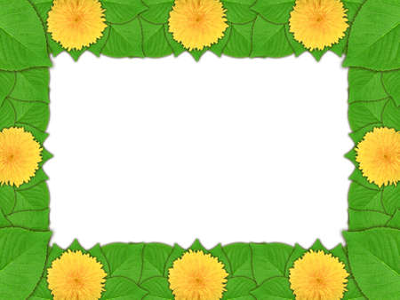 Floral frame with yellow flowers and green leaf on white background. Nature art ornament template for your design. Close-up. Studio photography. photo