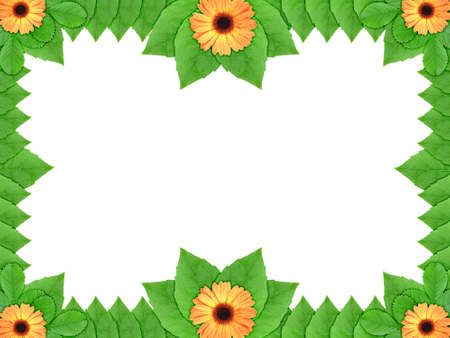 Floral frame with orange flowers and green leaf on white background. Nature art ornament template for your design. Close-up. Studio photography. photo