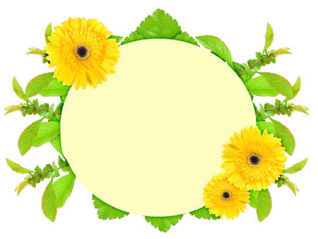 Floral ellipse frame with yellow flowers and green leaf. Nature art ornament template for your design. Isolated on white background. Close-up. Studio photography. photo