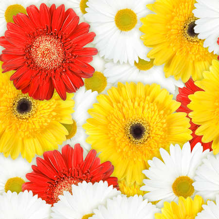 Abstract background of red, yellow and white flowers. Seamless pattern for your design. Close-up. Studio photography. photo