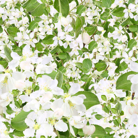 Abstract background of apple-tree branch with white flowers and green leafs. Seamless pattern for your design. Close-up. Studio photography. photo