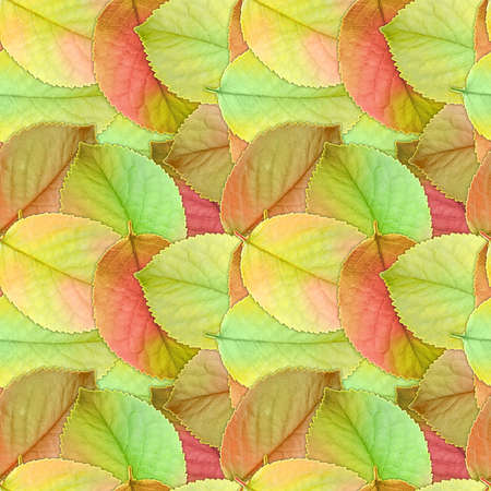 Abstract background of autumn green, yellow and orange leafs. Seamless pattern for your design. Close-up. Studio photography. Stock Photo - 13678838