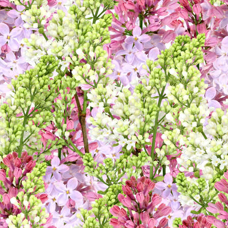 Abstract background of white and purple lilac. Seamless pattern for your design. Close-up. Studio photography. Stock Photo - 13678811