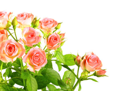 Bouquet of light pink roses with green leafes. Isolated on white background.  photo