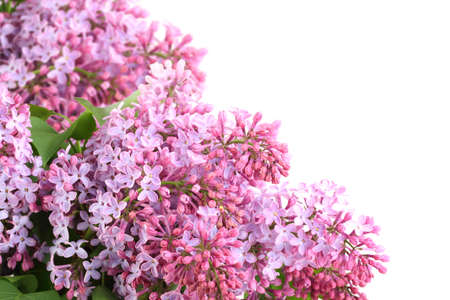 Frame of lilac  bouquets with purple flowers and green leafes. Isolated on white background. Close-up. Studio photography. photo