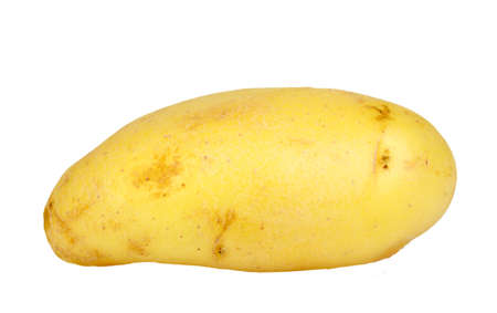 Single yellow raw potato. Isolated on white background. Close-up. Studio photography. photo