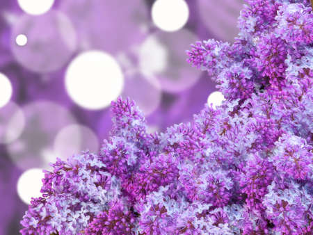Abstract background with branch of puple lilac on bokeh backdrop. Close-up. Studio photography. photo
