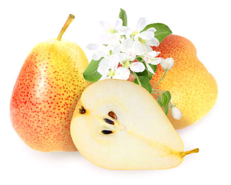 Heap of fresh yellow-orange pears with green leaf and white flowers.  photo