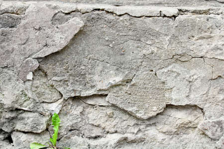 photography background: Young green sprout on gray background wall cement. Close-up. Outdoor photography. Stock Photo