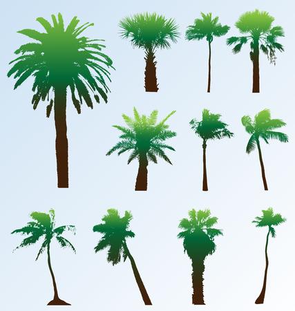 palmtrees: Colecci�n de vectores de siluetas palmeras. F�cil de editar, de cualquier tama�o. Vectores