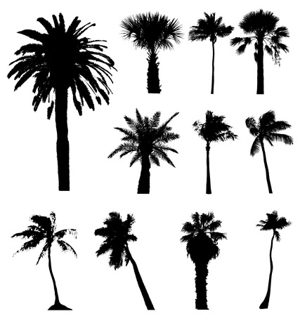 collections: Collection of vector palm trees silhouettes. Easy to edit, any size. Illustration