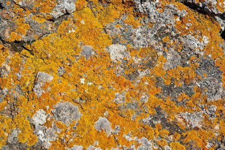 spore: Rock with orange lichen over it as textured background.