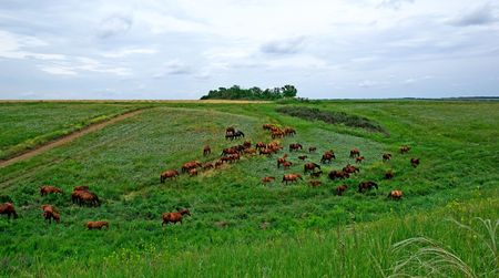 Horses herd in steppe. Animal wildlife landscape. photo