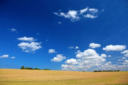 Colorful summer field landscape, Europe. Good as background or backdrop. Stock Photo - 6902365