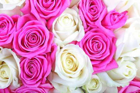 Pink and white roses as textured background or backdrop. photo