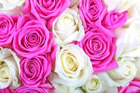 Roses roses et blancs comme texture de fond ou de la toile de fond. Banque d'images
