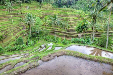 Balinese rice terraces landscape, Indonesia. High dynamic range photography. photo