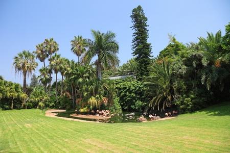 Beautiful park with flamingo on Tenerife island, Canary. Stock Photo - 9858603