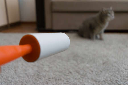 sticky roller cleans the carpet from cat hair