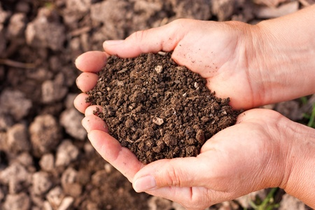 black soil: Female hands full of soil over soil background.Representing fertility Stock Photo