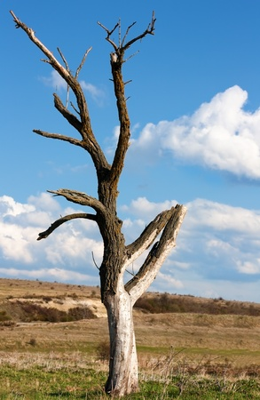 toter baum: Tot trocken Baum in der Nähe Varna, Bulgarien Lizenzfreie Bilder