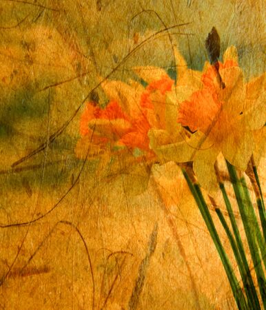 Abstract textured closeup of daffodil flowers for vintage look photo
