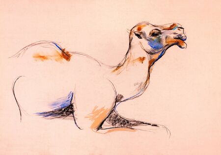 Old,grunge original pastel and  hand drawn, working  sketch of a camel.Free composition photo
