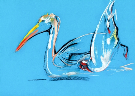 Original pastel and  hand drawn painting or  working  sketch of pelican .Free composition photo