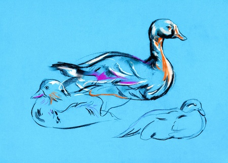 Original pastel and  hand drawn painting or  working  sketch of duck.Free composition