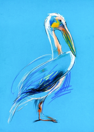 Original pastel and  hand drawn painting or  working  sketch of a  pelican photo