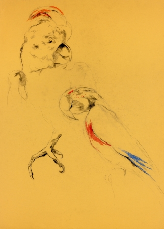 Original pastel and  hand drawn painting or  working  sketch of parrot.Free composition photo