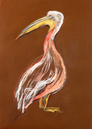 Original pastel and  hand drawn painting or  working  sketch of a  pelican Stock Photo - 15890269