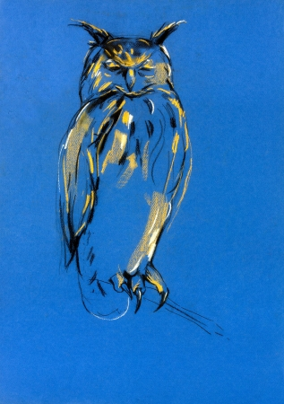 prey:  Original pastel and  hand drawn painting or  working  sketch of owl.Free composition of birds of prey. rapacious birds.