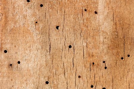 Old grunge wooden  texture or background with termite holes.Eaten by wood warms
