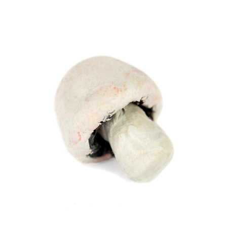 dough: Hand made plasticine or modeling clay figure of a field mushroom on white background