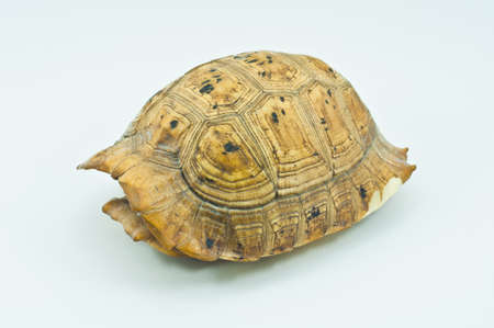 Carapace,Freshwater turtle shell,