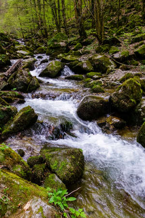 Flowing water over rocks in nature pakr Papuk. Jankovac. Croatia, Europe Stock Photo