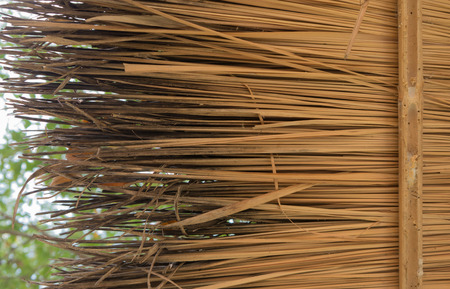 thatched: Thatched roof