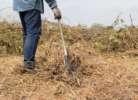 shoveling: a man rake shoveling dry grass