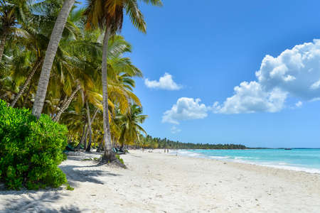 Sandy Caribbean Beach with Coconut Palm Trees in Dominican Republic Stock Photo