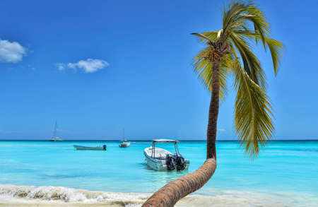 dominican: Palm Tree, Caribbean Sea, Boats And Blue Sky Stock Photo