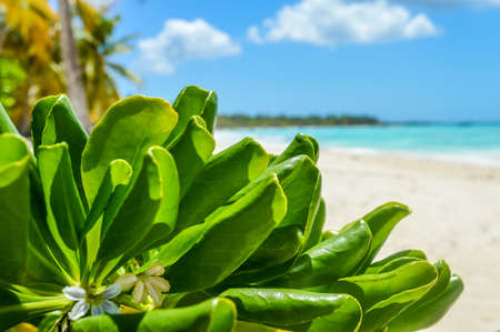 exotic plant: Tropical plant leaves, blue sea and exotic white sand beach ander the sun Stock Photo