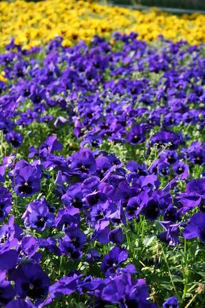 festive occasions: flowers plant plants