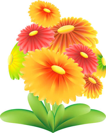 Yellow and Red Flowers on white backgrond, Flower Vector