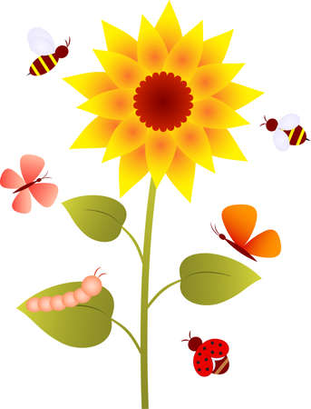 Sunflower, Flower Vector, Butterflies Çizim