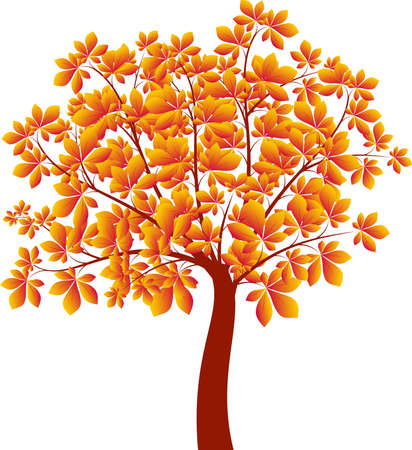 chestnut tree: Chestnut Tree illustration