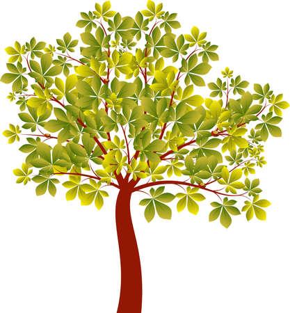緑の木、Chetsnut 木