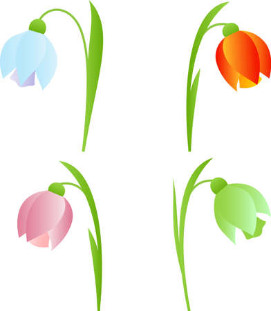snowdrop: Isolated Spring Snowdrop Flowers