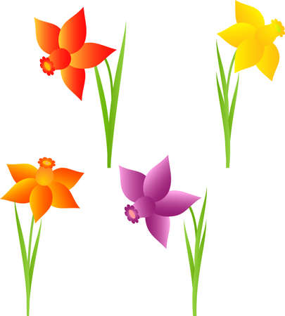 Isolated Spring Flower Vectors, Daffodil Flower, Nacissus Flowers Vectors 向量圖像
