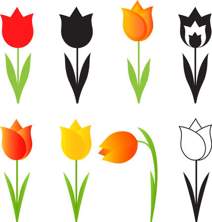 white tulip: Isolated Spring Flowers Vectors, Tulip Vectors